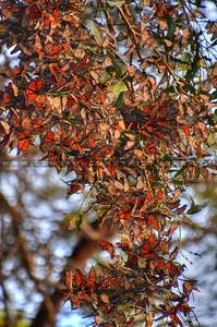 butterflies_6999-2