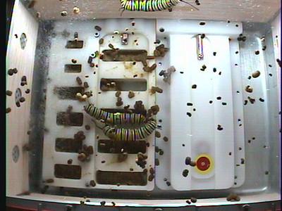 Monarch1-Flt_Whole 2009-11-23_21-17-38