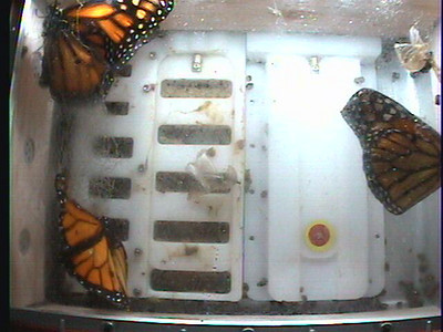Monarch1-Flt_Whole 2009-12-06_04-27-10