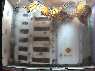 Monarch1-Flt_Whole 2009-12-05_22-26-27