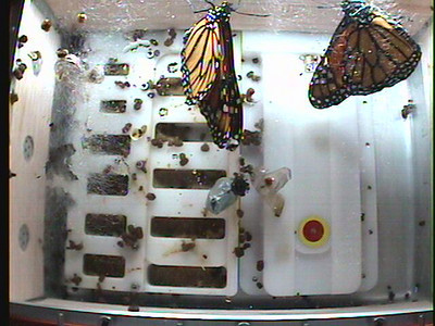 Monarch1-Flt_Whole 2009-12-04_02-44-34