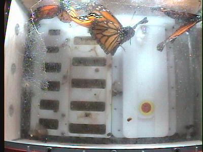 Monarch1-Flt_Whole 2009-12-07_21-35-19