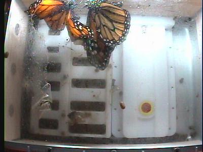 Monarch1-Flt_Whole 2009-12-07_04-07-07