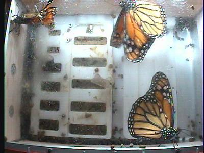 Monarch1-Flt_Whole 2009-12-05_21-45-15