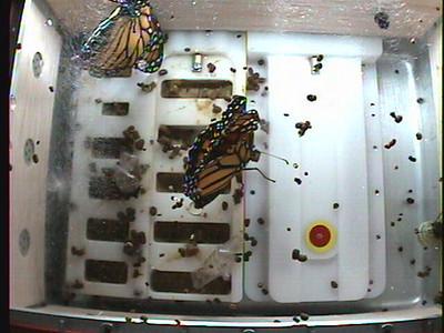 Monarch1-Flt_Whole 2009-12-03_20-53-36