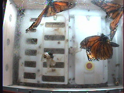 Monarch1-Flt_Whole 2009-12-06_02-44-07