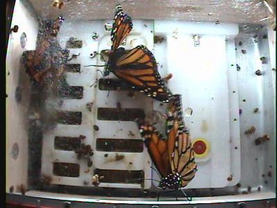 Monarch1-Flt_Whole 2009-12-04_22-26-06