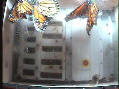 Monarch1-Flt_Whole 2009-12-07_02-34-19