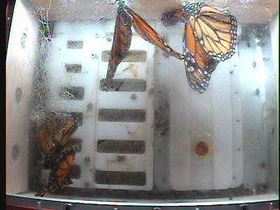 Monarch1-Flt_Whole 2009-12-07_01-01-29