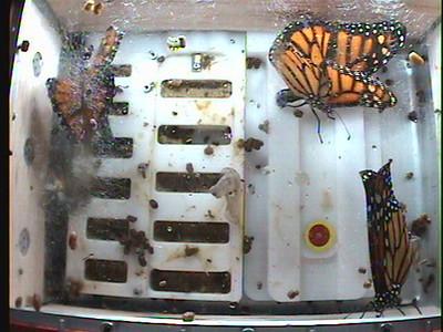 Monarch1-Flt_Whole 2009-12-04_23-07-18