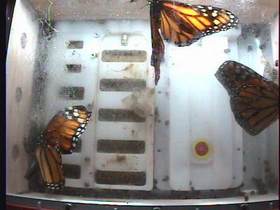Monarch1-Flt_Whole 2009-12-06_04-16-52