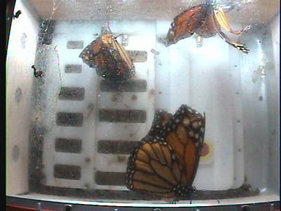 Monarch1-Flt_Whole 2009-12-08_05-29-26
