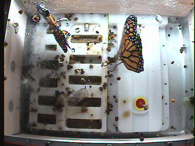 Monarch1-Flt_Whole 2009-12-04_01-52-55