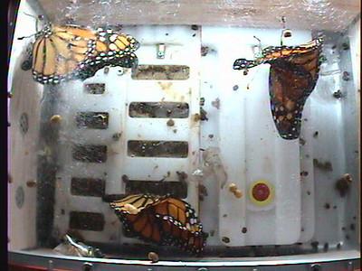Monarch1-Flt_Whole 2009-12-05_01-10-52