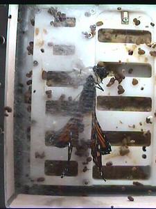Monarch1-Flt_Whole 2009-12-03_19-41-35