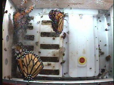 Monarch1-Flt_Whole 2009-12-04_23-27-53