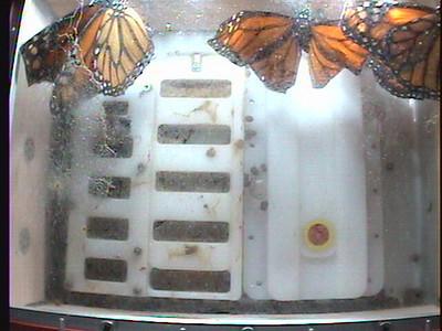 Monarch1-Flt_Whole 2009-12-07_01-22-06