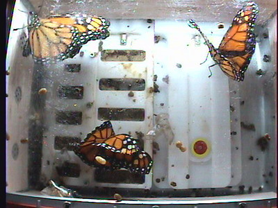 Monarch1-Flt_Whole 2009-12-05_01-41-43