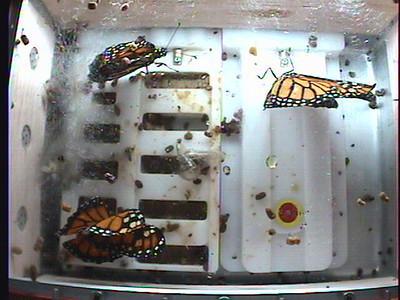 Monarch1-Flt_Whole 2009-12-04_20-01-56