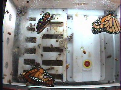 Monarch1-Flt_Whole 2009-12-04_21-24-16