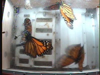 Monarch1-Flt_Whole 2009-12-07_02-13-42