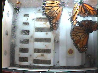Monarch1-Flt_Whole 2009-12-06_02-54-24