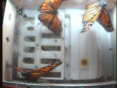 Monarch1-Flt_Whole 2009-12-07_02-03-23