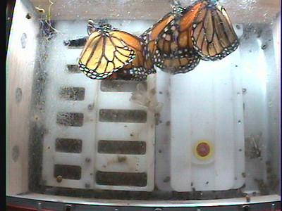 Monarch1-Flt_Whole 2009-12-06_03-56-15