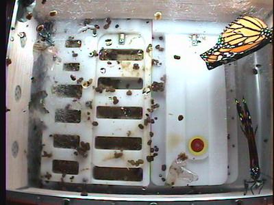 Monarch1-Flt_Whole 2009-12-04_02-54-52