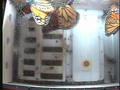 Monarch1-Flt_Whole 2009-12-06_02-33-49