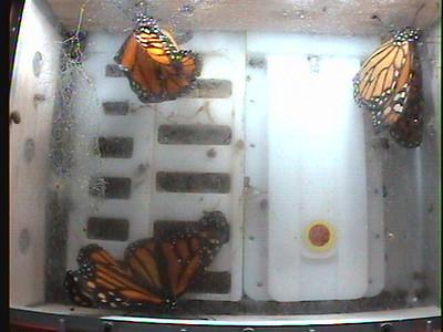 Monarch1-Flt_Whole 2009-12-07_06-52-01