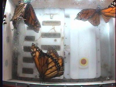 Monarch1-Flt_Whole 2009-12-08_01-22-03