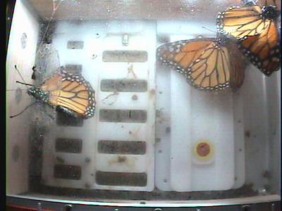 Monarch1-Flt_Whole 2009-12-08_02-44-34
