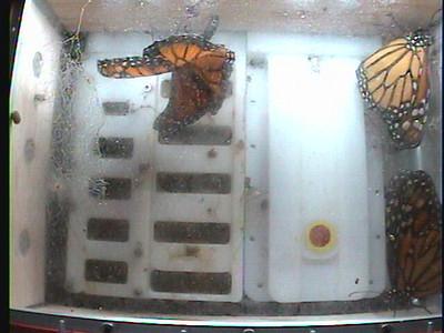 Monarch1-Flt_Whole 2009-12-07_19-10-35