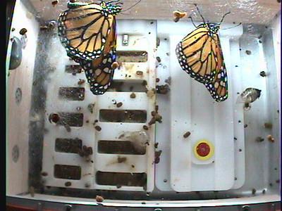 Monarch1-Flt_Whole 2009-12-04_05-18-56