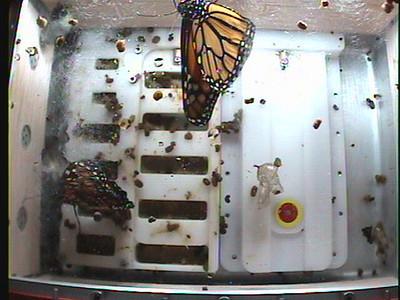 Monarch1-Flt_Whole 2009-12-04_03-56-37