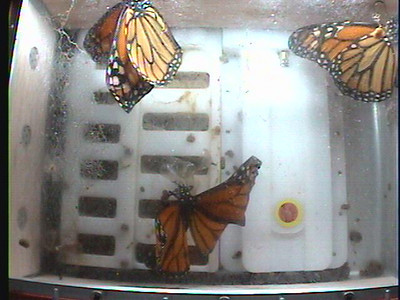 Monarch1-Flt_Whole 2009-12-06_23-08-06