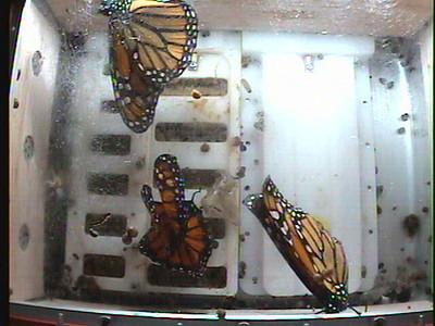 Monarch1-Flt_Whole 2009-12-05_04-16-11