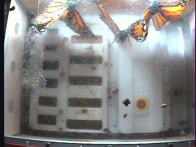 Monarch1-Flt_Whole 2009-12-07_23-59-37
