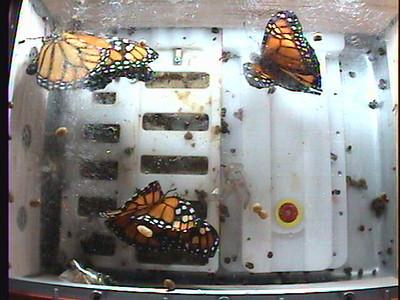 Monarch1-Flt_Whole 2009-12-05_02-02-18