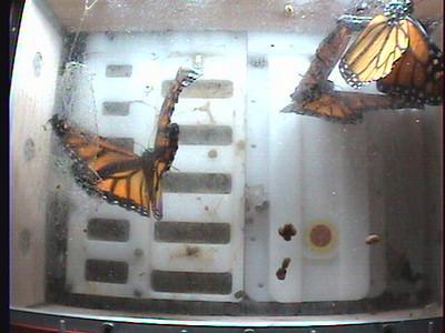 Monarch1-Flt_Whole 2009-12-08_00-09-55