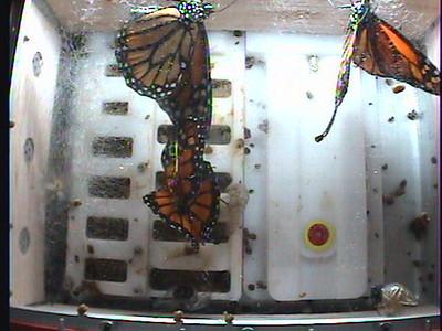 Monarch1-Flt_Whole 2009-12-05_02-33-10