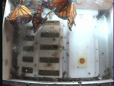 Monarch1-Flt_Whole 2009-12-05_23-17-57