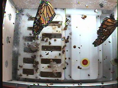Monarch1-Flt_Whole 2009-12-03_22-57-32