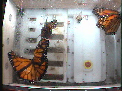 Monarch1-Flt_Whole 2009-12-06_05-29-03