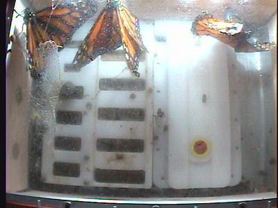 Monarch1-Flt_Whole 2009-12-08_02-03-21