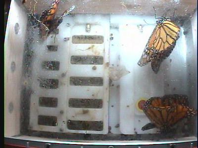 Monarch1-Flt_Whole 2009-12-06_19-21-10