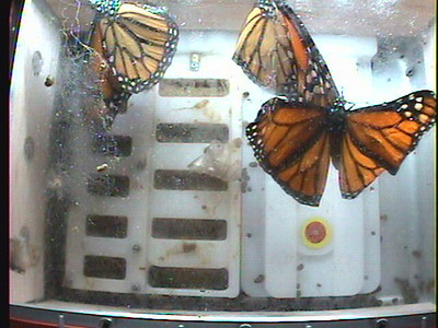 Monarch1-Flt_Whole 2009-12-06_03-35-39