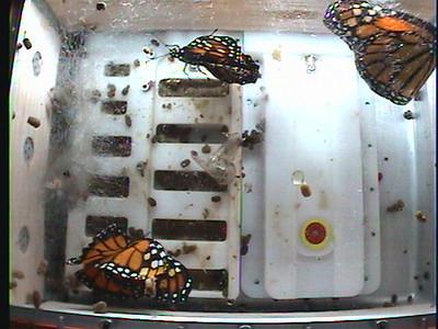 Monarch1-Flt_Whole 2009-12-04_21-13-57