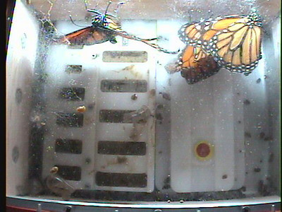 Monarch1-Flt_Whole 2009-12-06_01-52-35